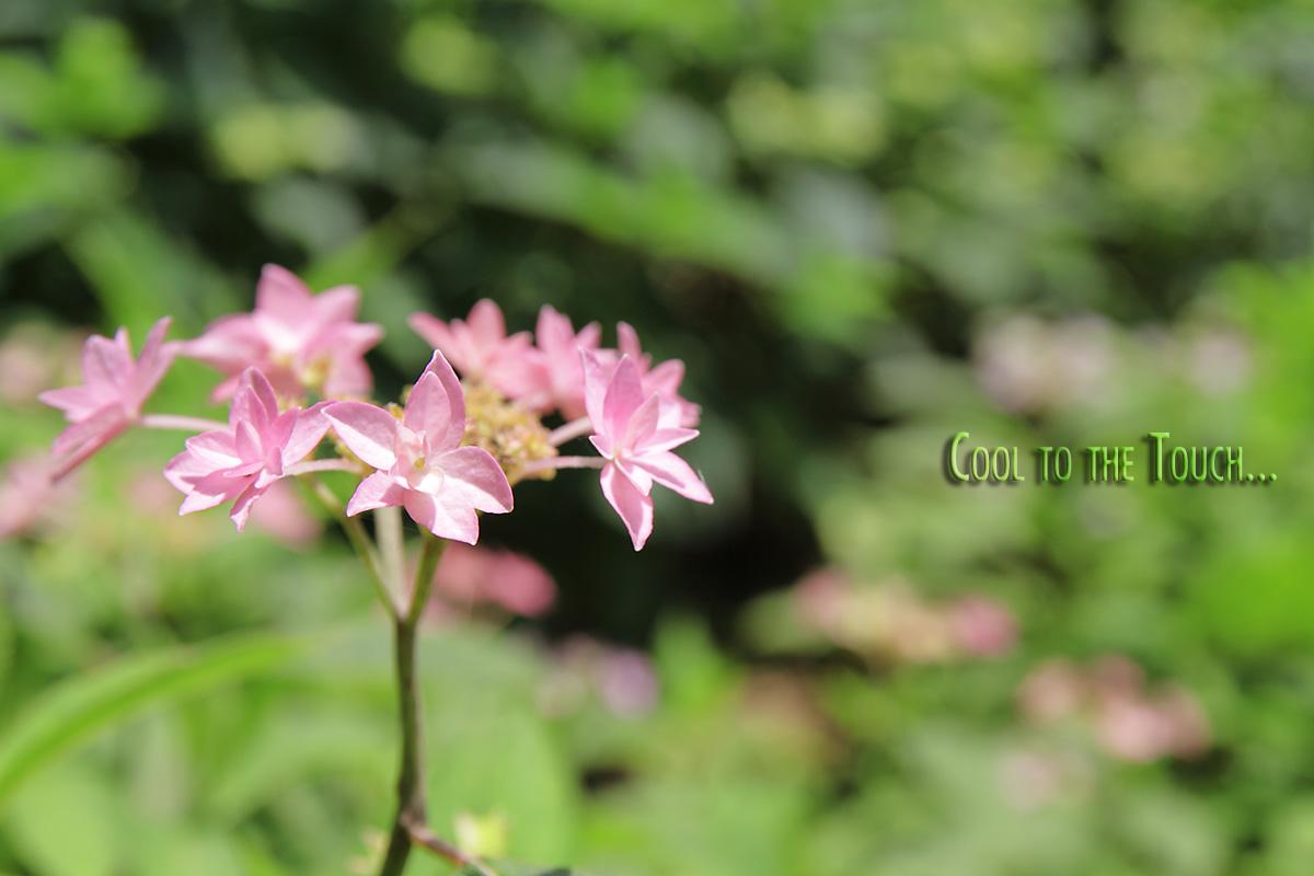 006_20100531173302.jpg
