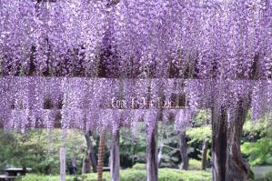 Fuji001_20100511165813.jpg