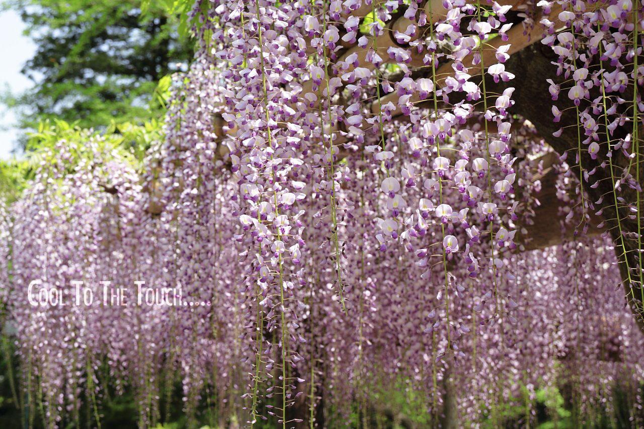 fuji006_20100511165811.jpg