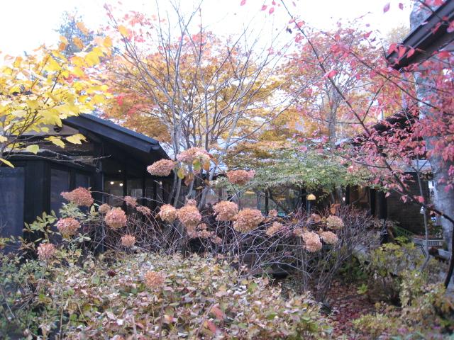 2012110608八ヶ岳蓼科 (63)