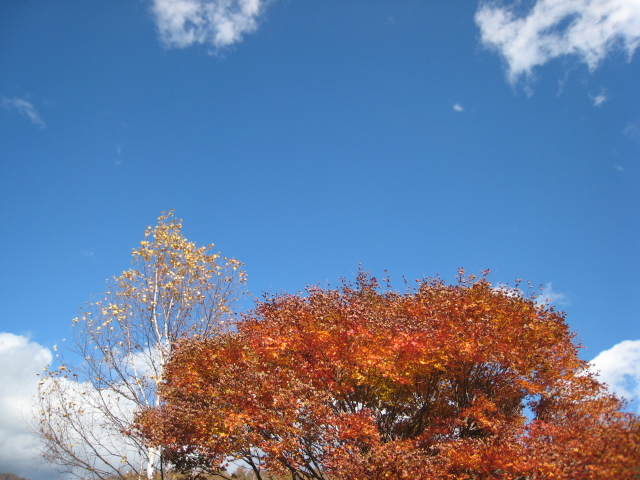 2012110608八ヶ岳蓼科 (224)
