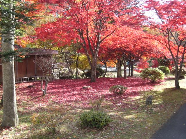 2012110608八ヶ岳蓼科 (322)