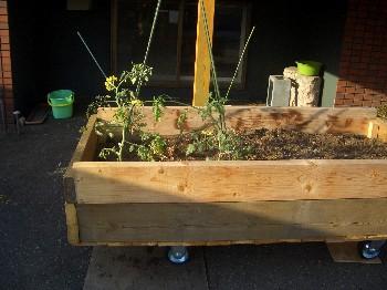 120513 トマト植える.jpg