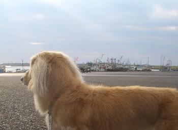 天塩漁港のロナウド2.jpg