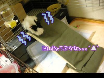 b1_20100329120924.jpg