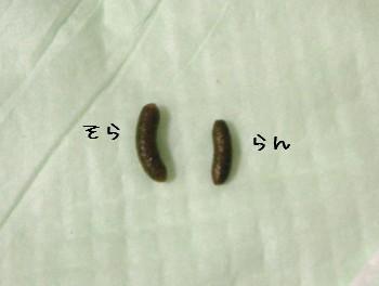b1_20100506191935.jpg