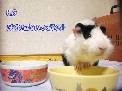 b2_20100329125552.jpg