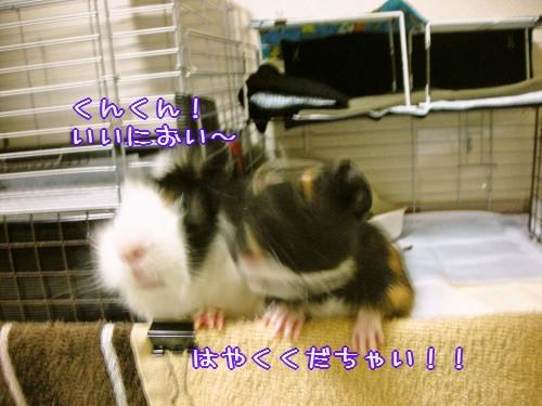 b2_20100609172132.jpg