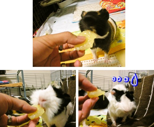 b2_20100626102832.jpg