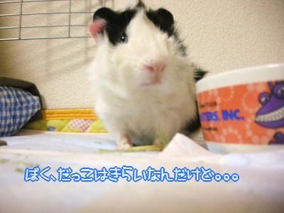 b3_20100329125748.jpg