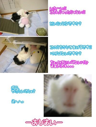 b3_20100405130738.jpg