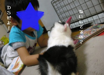 b3_20100429193802.jpg
