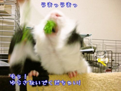 b3_20100609172132.jpg
