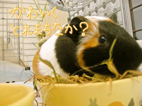 b3_20100701082439.jpg