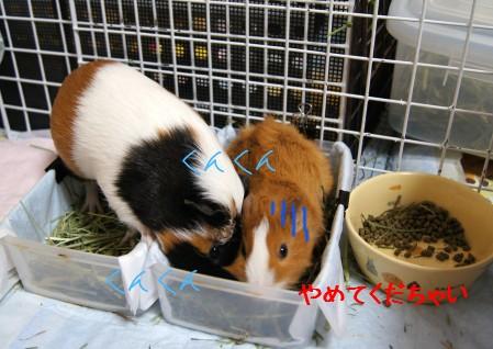 b3_20110118150251.jpg