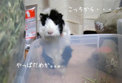 b3_20110310085311.jpg