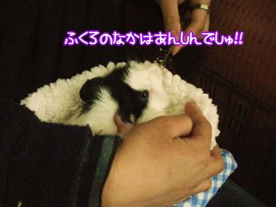b4_20100328204646.jpg