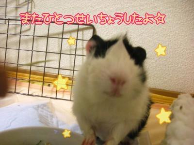 b4_20100329120923.jpg