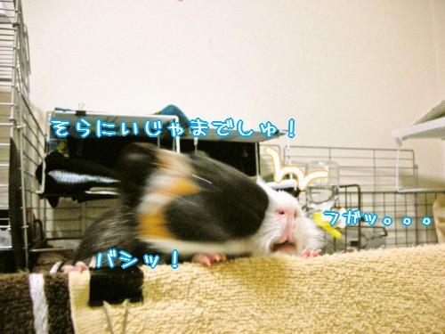 b4_20100609172132.jpg