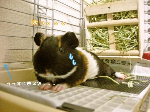 b4_20100702214725.jpg