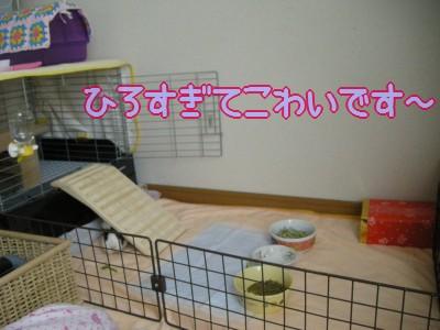 b5_20100327215514.jpg