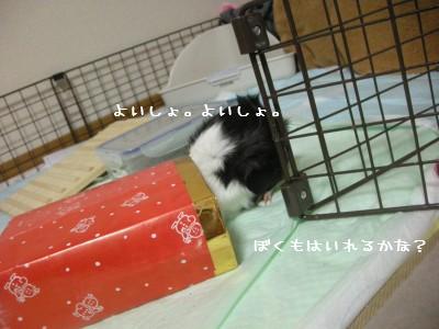 b6_20100501114743.jpg
