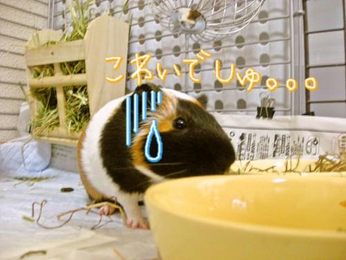 b7_20100701082502.jpg