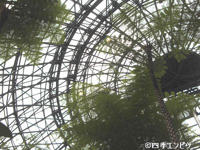 20100307 夢の島 熱帯植物館 天井