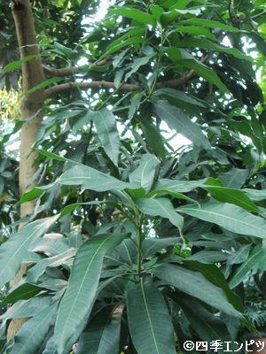 20100307 夢の島 熱帯植物館 不明植物