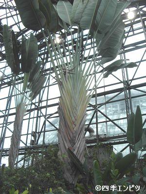 20100307 夢の島 熱帯植物館 不明植物 2