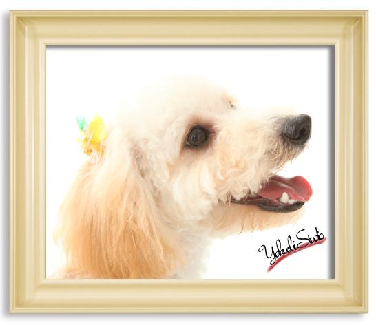 12-07-11-6439可愛いワンちゃんの写真