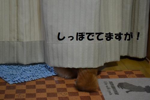 DSC_1974_convert_20120207133358p