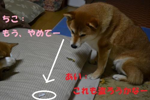 DSC_2612_convert_20120514135704p