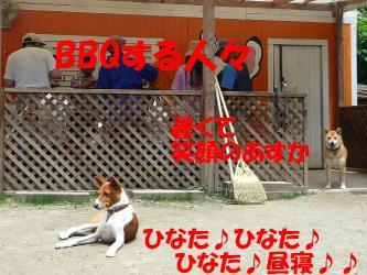bP1150461.jpg