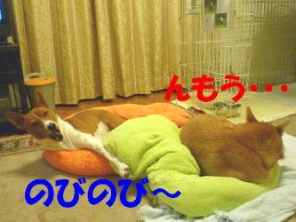 bP1170052.jpg