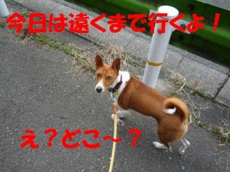 bP1170087.jpg