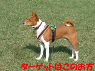 bP1170121.jpg