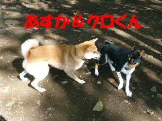 bP1170347.jpg