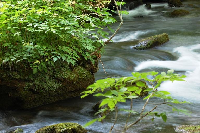 20100725 奥入瀬渓流