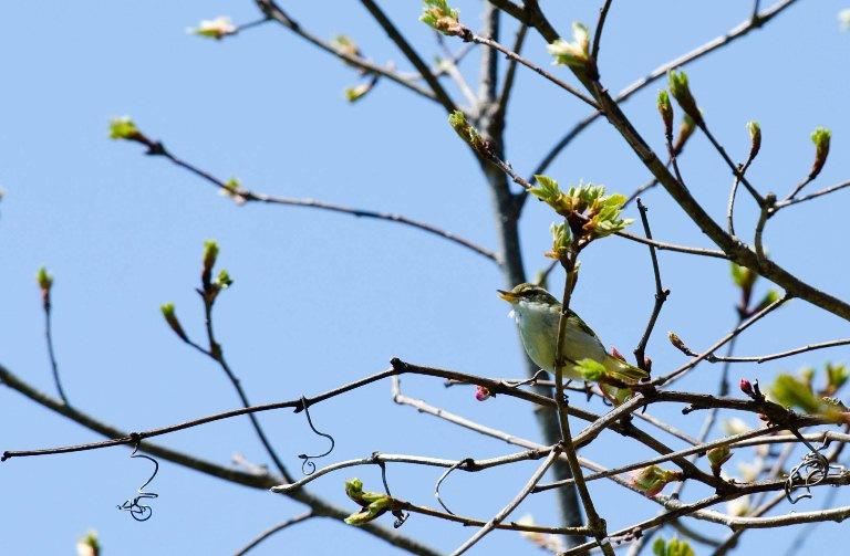 20110603-野鳥