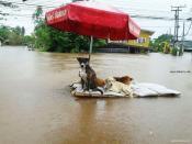 タイ洪水04