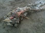 メキシコのビーチで謎の生物(UMA)の死体05