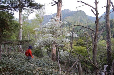 御岳山からの尾根道2-6