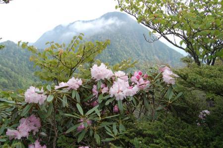 薬師岳から皇海山2-12