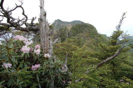 薬師岳から鋸山2-13