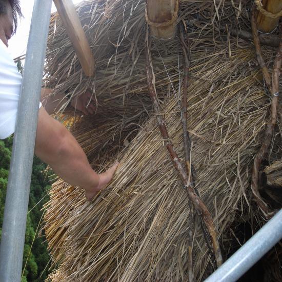 縫木ぬいぼく