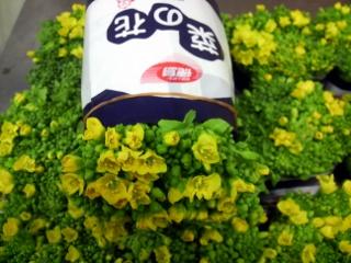 菜の花20