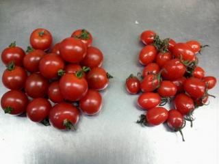 グミトマト14