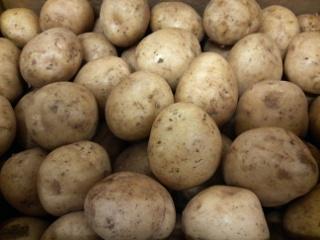 新馬鈴薯12