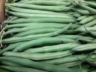 インゲン豆 キセラ種11